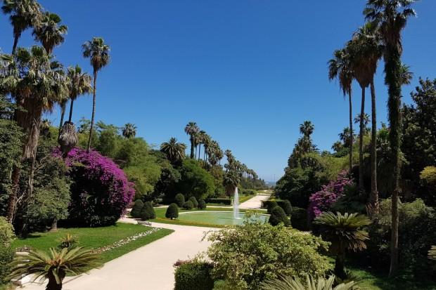 africa_algeria_jardin essai puro